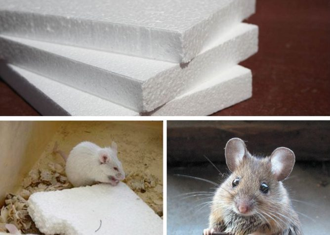 Мыши в пенопласте
