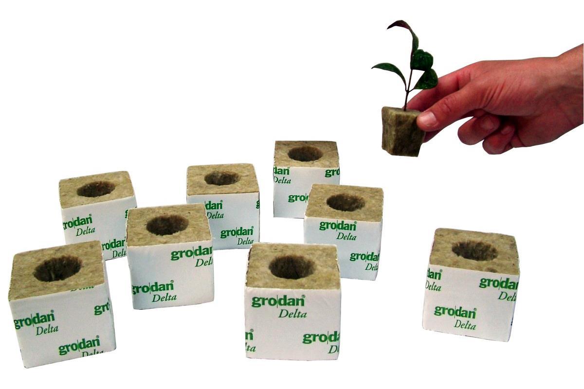 Выращивание на базальтовой вате 8